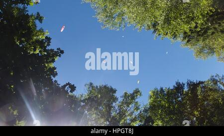 Low angle view of paragliders in blue sky above tree tops, Chamonix, Mont Blanc, France - Stock Photo