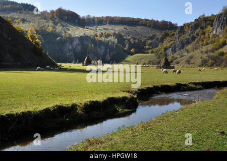 Watercourse in a green meadow. Herd of sheep in the background - Stock Photo
