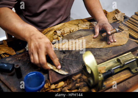 closeup of hands making cigar from tobacco leaves traditional stock photo royalty free image. Black Bedroom Furniture Sets. Home Design Ideas