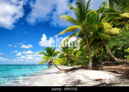 Tropical white sandy beach with palm trees. Saona Island, Dominican Republic - Stock Photo