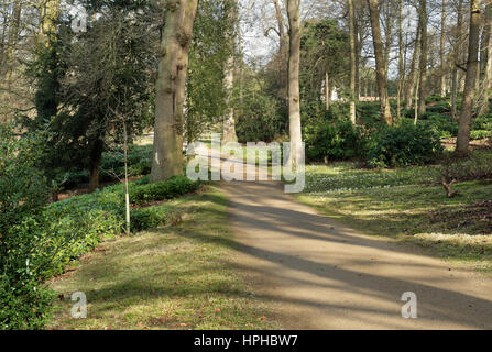 Dappled Winter Sunshine on an English Woodland path with Snowdrops  in the grass - Stock Photo