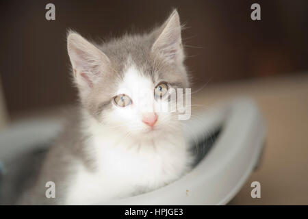 Kleines Hauskaetzchen - little cat - Stock Photo