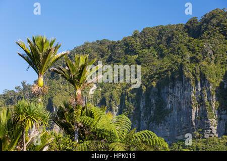 Punakaiki, Paparoa National Park, West Coast, New Zealand. Wooded limestone cliffs and nikau palms (Rhopalostylis sapida) near Dolomite Point.