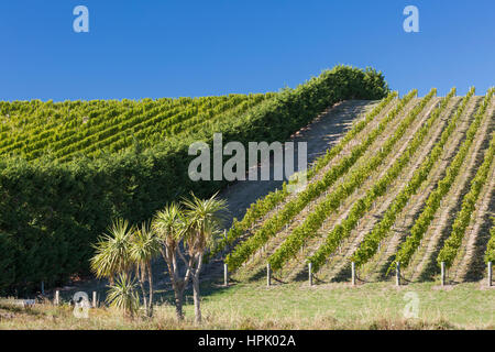 Blenheim, Marlborough, New Zealand. Rows of vines on hillside at a typical vineyard in the Wairau Valley. - Stock Photo