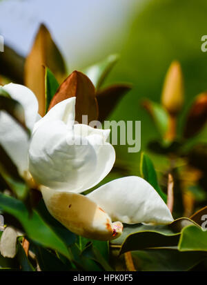 Flowers in the Botanical garden of Melbourne. - Stock Photo