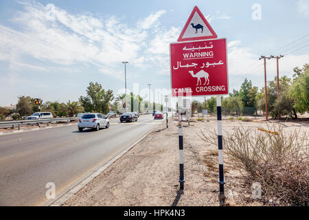 ABU DHABI, UAE - NOV 29, 2016: Camel crossing sign at a busy road in the Emirate of Abu Dhabi. United Arab Emirates, - Stock Photo