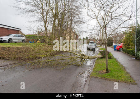 Staffordshire, West Midlands. 23rd Feb, 2017. UK Weather. Storm Doris batters Staffordshire in the West Midlands. - Stock Photo
