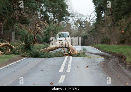 Barnham, UK. 23rd Feb, 2017. Motorists had a lucky escape as Storm Doris created strong winds and split a tree which - Stock Photo