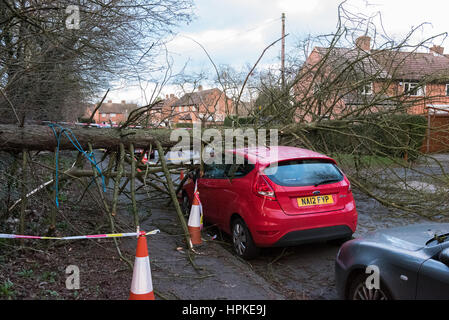 Beaconsfield, UK. 23rd Feb 2017. A car was damaged in Beaconsfield when a large tree was blown over in high winds, - Stock Photo
