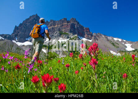 Hiker in a Flower-Filled Meadow at the Base of Three Fingered Jack Mountain Outside Bend Oregon - Stock Photo