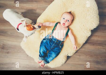 Little boy and dog at home. Adorable baby resting on the fur blanket. - Stock Photo