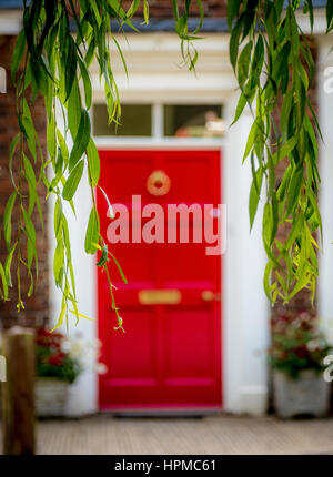 Red Front door on house seen through weeping willow branches in Easingwold, Yorkshire, UK. - Stock Photo