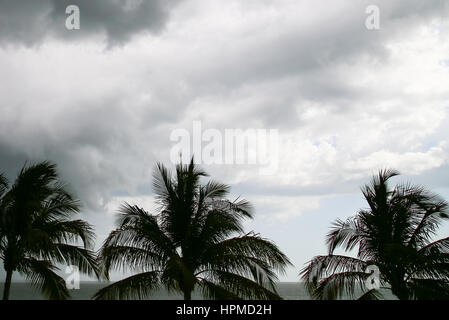 Thunderclouds in the sky above the Gulf of Mexico in Fort Myers Beach, in the foreground some palm trees. - Stock Photo