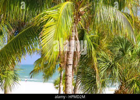 View of the white sand beach and the Gulf of Mexico through palm leaves on a sunny day in Fort Myers Beach. - Stock Photo