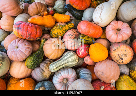 Close up of fall display of pumpkins, gourds and flowers at Hershberger's Farm in Millersburg, Ohio, USA. - Stock Photo