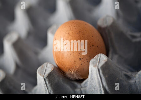 Speckled brown egg on blue egg tray with feather in foreground - Stock Photo