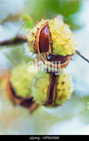 A close-up of seed pods. - Stock Photo