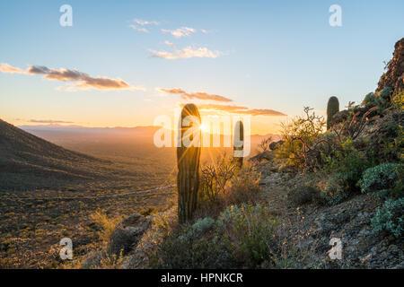 Saguaro cacti stand against setting sun at Gates Pass near Tucson Arizona - Stock Photo