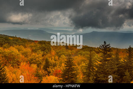 Red autumn leaves across Dolly Sods Wilderness area in West Virginia with panorama to distant mountains - Stock Photo