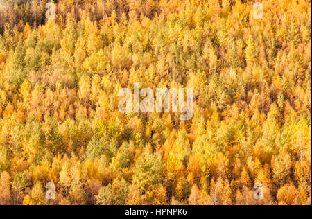 North America; Canada; Yukon Territory; Coastal Range Mountains; Aspens; Autumn colors. - Stock Photo