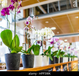Pots of Orchids on railing in store - Stock Photo