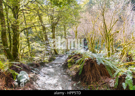 Trail through forest with fern, alpine vegetation, Mount Aspiring National Park, Otago, Southland, New Zealand - Stock Photo