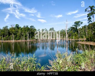 Still reflection of surrounding trees and clouds in a still blue lake - Stock Photo