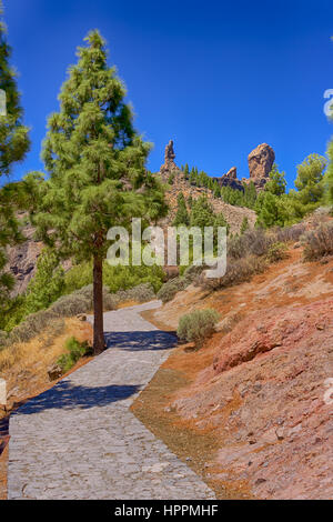 Path to Roque Nublo in Gran Canaria with a tree, Spain - Stock Photo