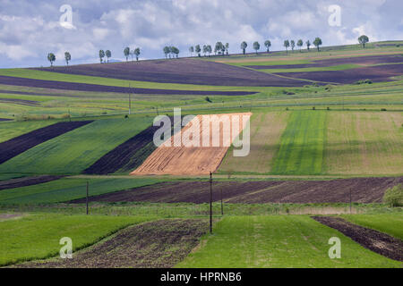 Abstract pattern texture of rolling wavy fields in spring. Spring green fields on hills. The field of young wheat. - Stock Photo