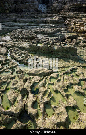 Geology at Thornwick nab, Thornwick bay, Flamborough, North Yorkshire. An area of dramatic rocky cliffs. - Stock Photo