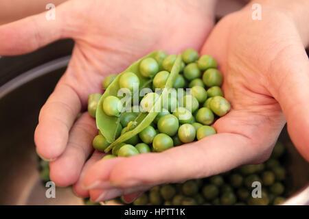 peas in hands - Stock Photo