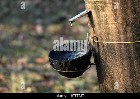 Tapping the white blood - Stock Photo