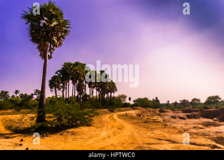 palm trees with landscape scenery (violet scenery) - Stock Photo