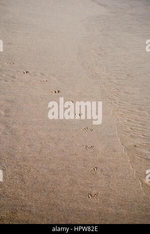 Bird footprints in sand on a beach