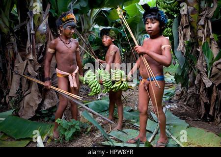 Banana plantation in Brazil. Bananas are a main export product. - Stock Photo