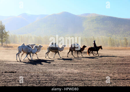 Camel Convoy - Stock Photo