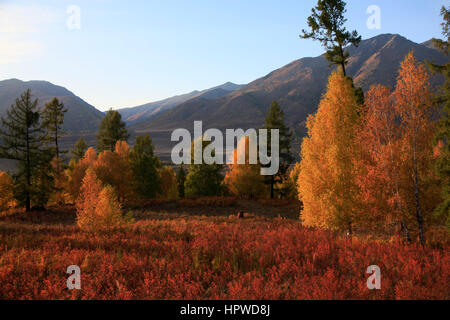 Deciduous trees on the way to Hemu Village - Stock Photo