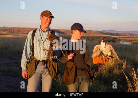 Boy holds a peregrine gyrfalcon cross tiercel (male falcon), while his father holds a peregrine falcon, falconry - Stock Photo