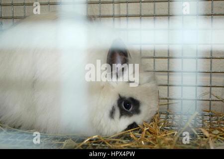 Beautiful white domestic rabbit in cage - Stock Photo