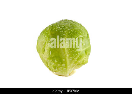 A Brussels sprout isolated on a white background. - Stock Photo