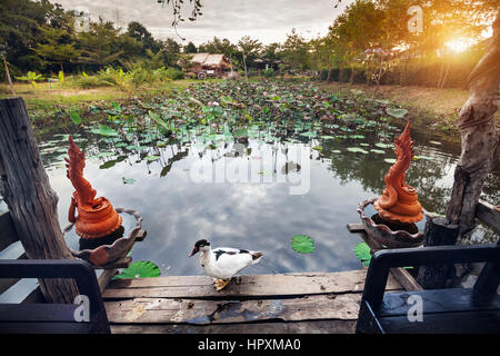 Beautiful White Duck at summerhouse near pond with lotus and Dragon statues in Sukhothai resort, Thailand - Stock Photo