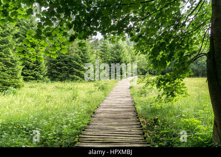 Trees Overhang the Wooden Pathways in Plitvice - Stock Photo