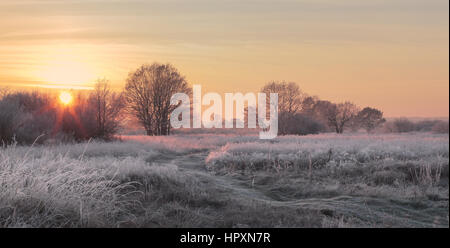 Christmas sun illuminate snowy meadow. xmas background with sun rays. - Stock Photo