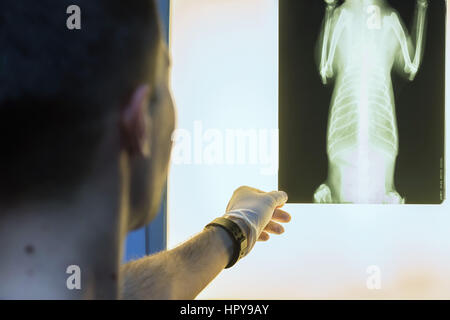 Close-up of veterinary physician examining pet radiograph - Stock Photo
