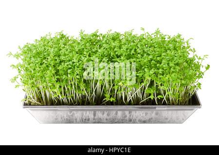 how to eat garden cress seeds