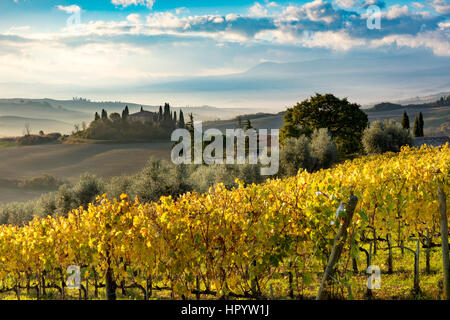 Early morning over vineyard and the Belvedere near San Quirico d'Orcia, Tuscany, Italy - Stock Photo