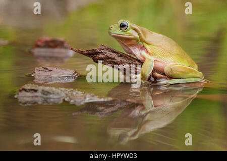 Stay on water - Stock Photo