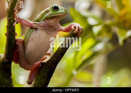 Stay On the Tree - Stock Photo