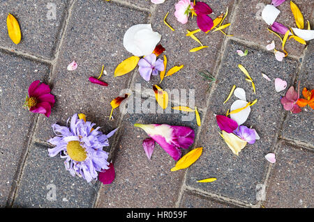 Roses leaves on ground after wedding - Stock Photo