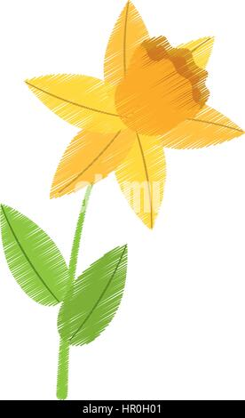 drawing daffodil flower spring floral - Stock Photo